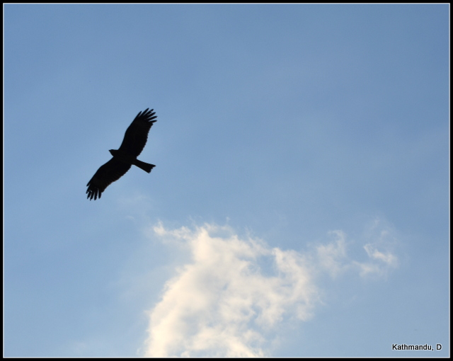 What would you like to be today? An eagle soaring across the skies?