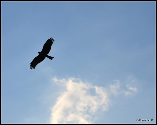 Eagle, sky, Kathmandu