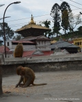 There were rumours that the Pashupatinath temple had collapsed. It had not as you can see in the background